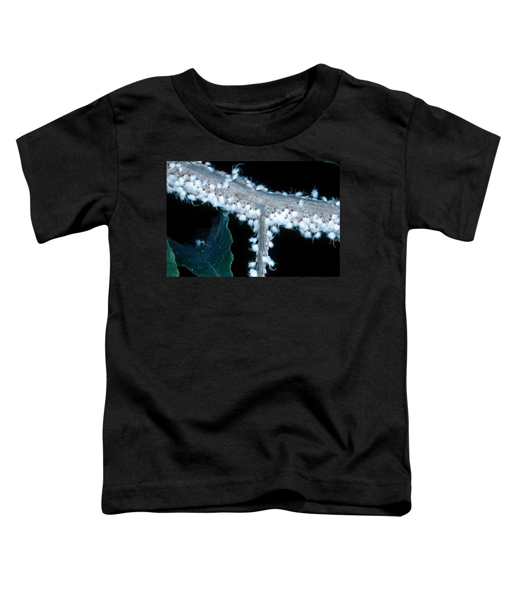 Agricultural Pest Toddler T-Shirt featuring the photograph Beech Blight Aphid by Carleton Ray