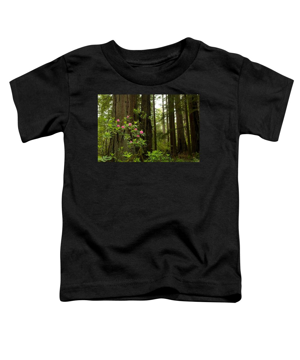 Del Norte County Photographs Toddler T-Shirts