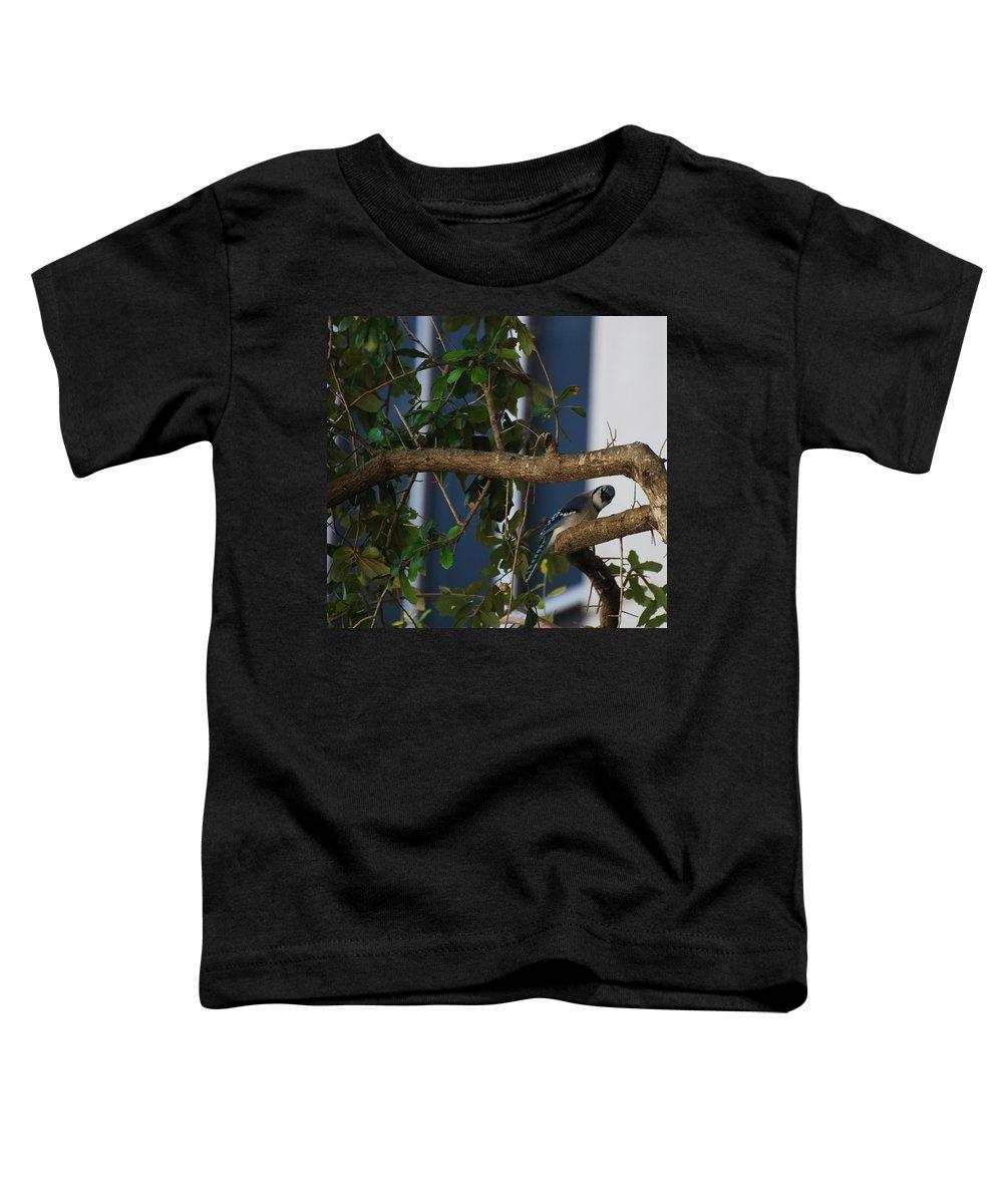 Birds Toddler T-Shirt featuring the photograph Blue Bird by Rob Hans