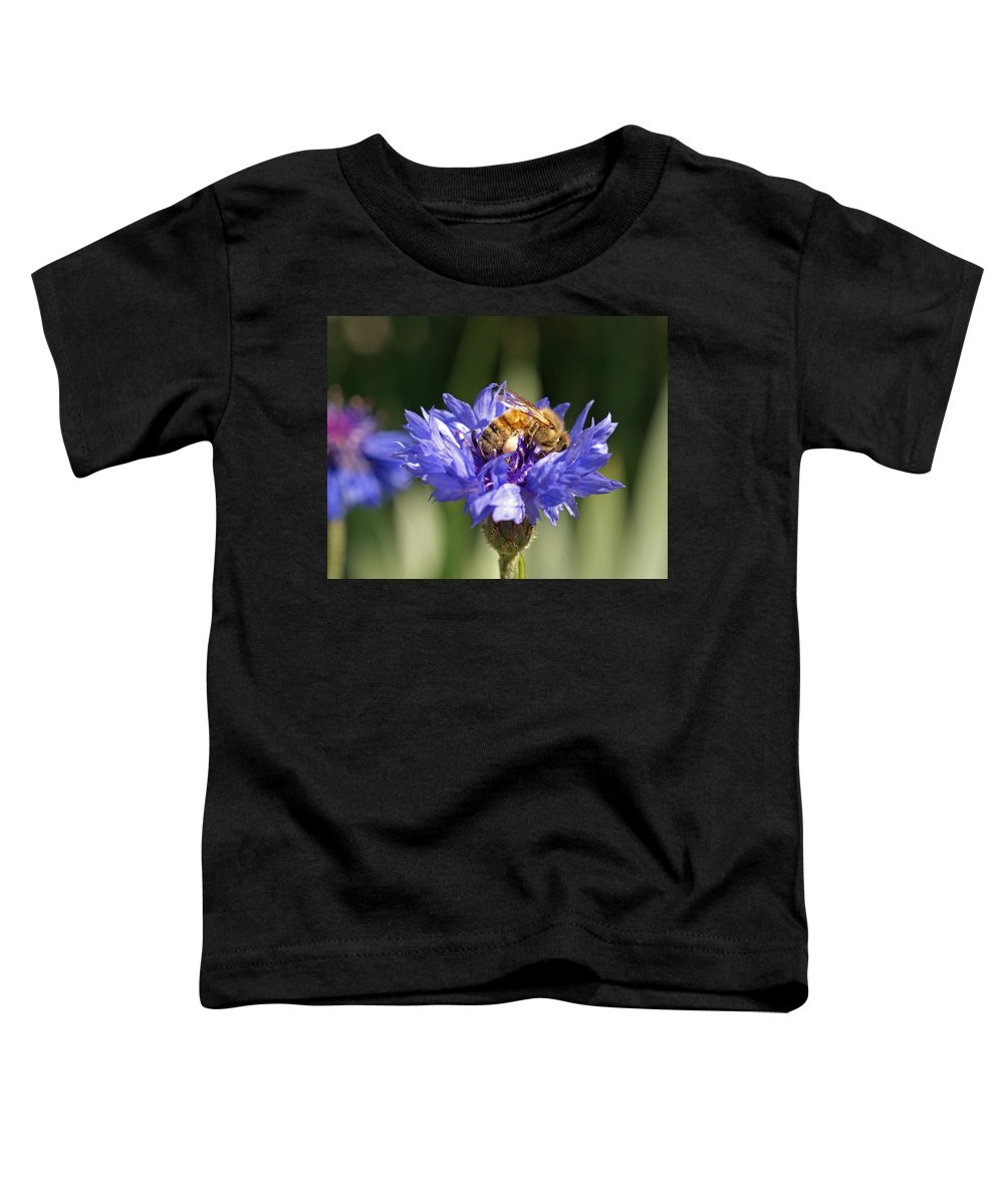Bee. Flower Toddler T-Shirt featuring the photograph Bachelor Button And Bee by Heather Coen