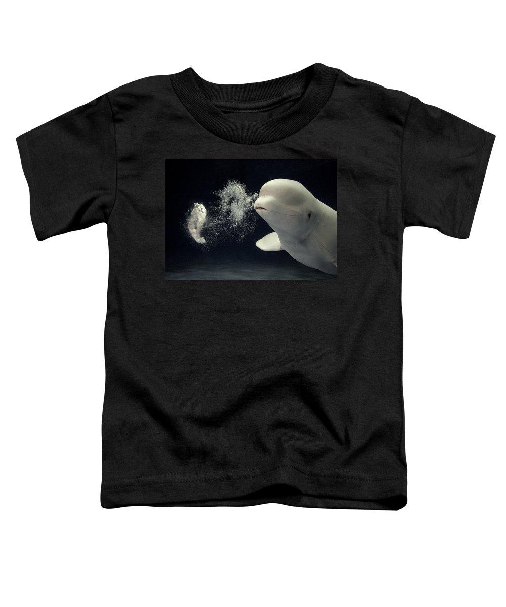 Mp Toddler T-Shirt featuring the photograph Beluga Delphinapterus Leucas Whale by Hiroya Minakuchi