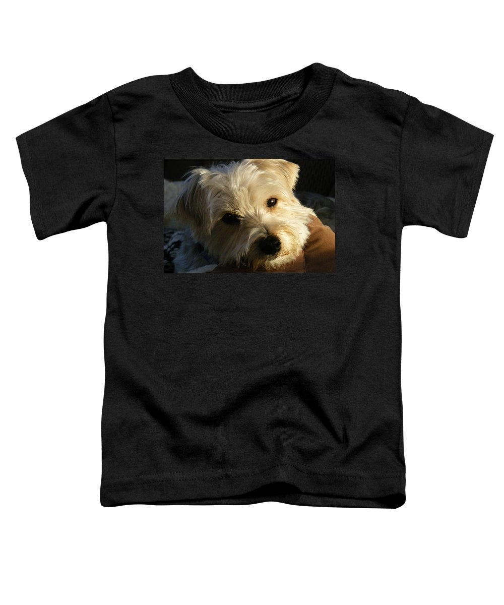 Dog Toddler T-Shirt featuring the photograph Charlie by Ed Smith