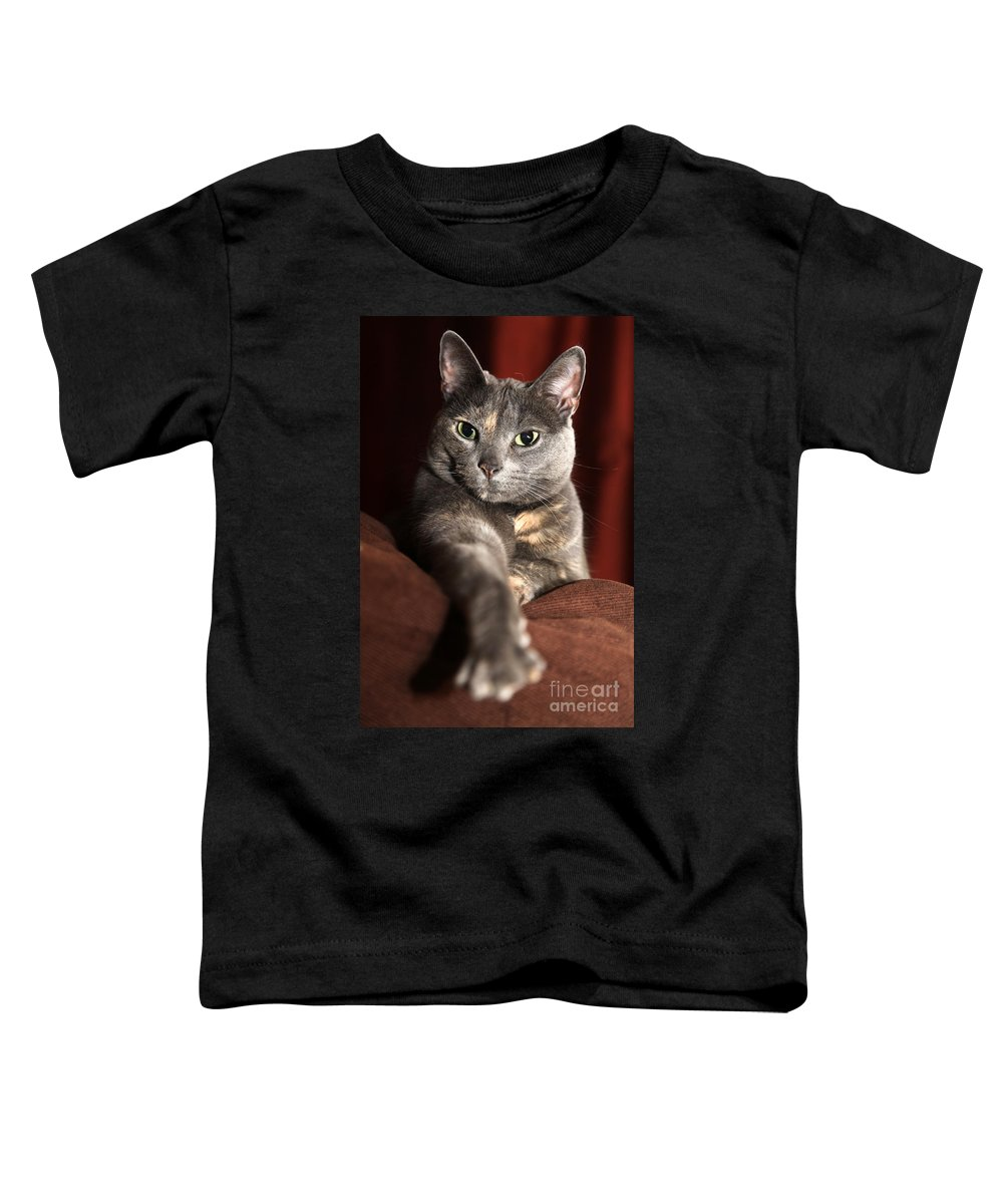 Kitty Toddler T-Shirt featuring the photograph Come Here by Amanda Barcon