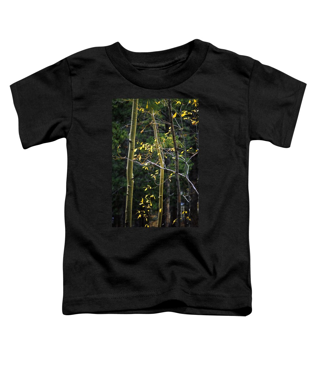 Aspen Toddler T-Shirt featuring the photograph Late Aspen by Jerry McElroy