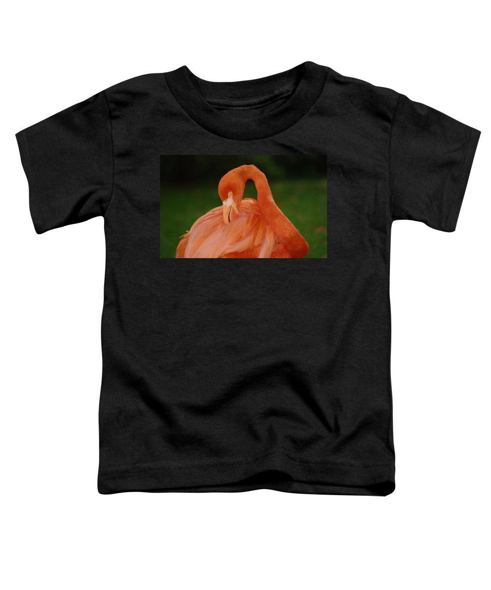 Flamingo Toddler T-Shirt featuring the photograph shy by Gaby Swanson