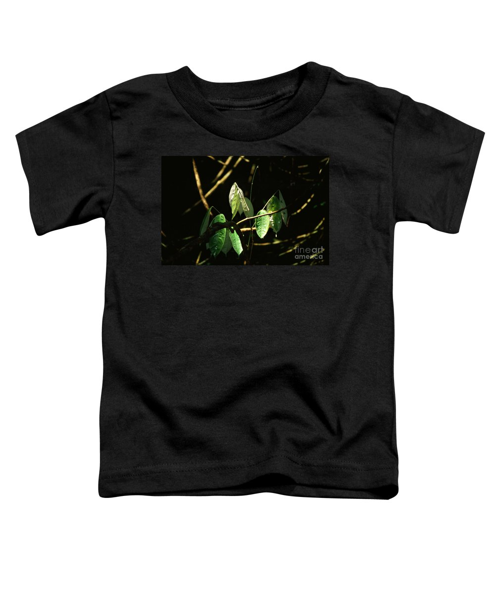 Leaves Toddler T-Shirt featuring the photograph Sunlit Leaves by Kathy McClure