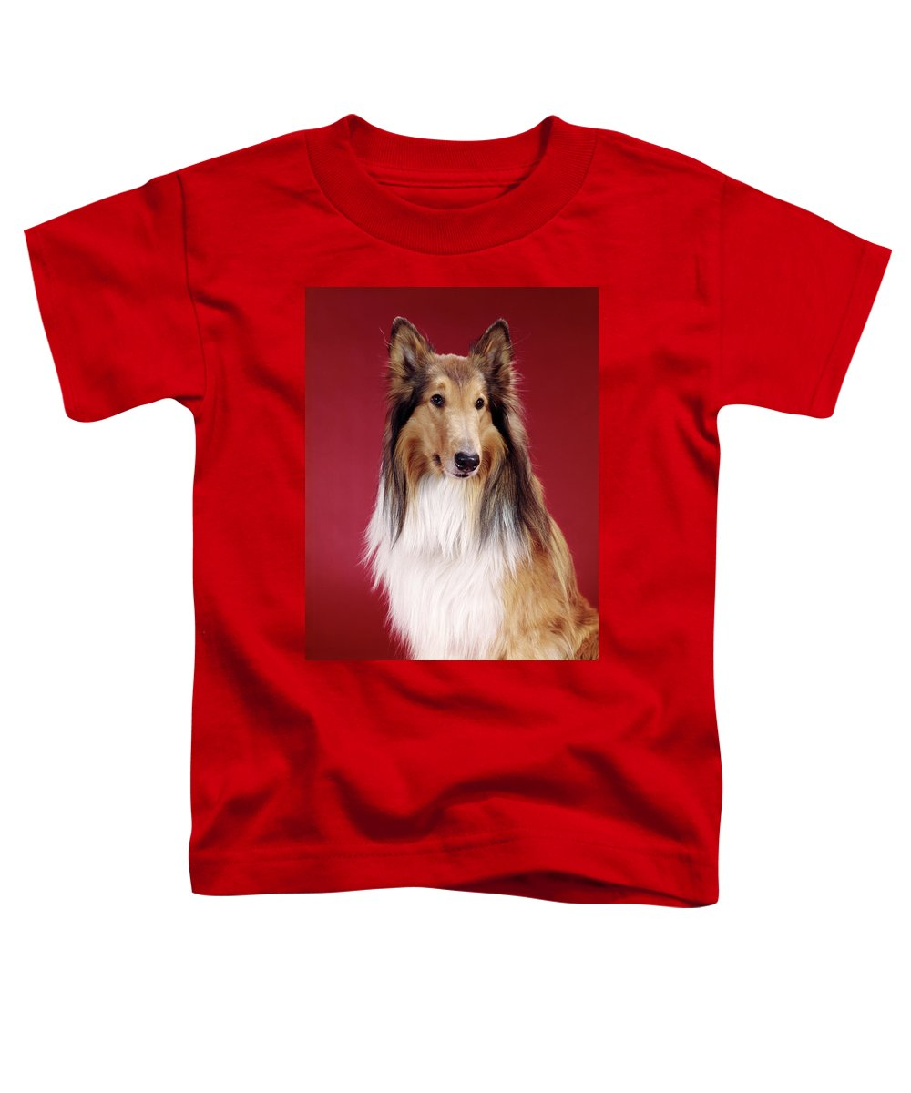 Photography Toddler T-Shirt featuring the photograph 1960s Portrait Of Collie Dog On Red by Vintage Images