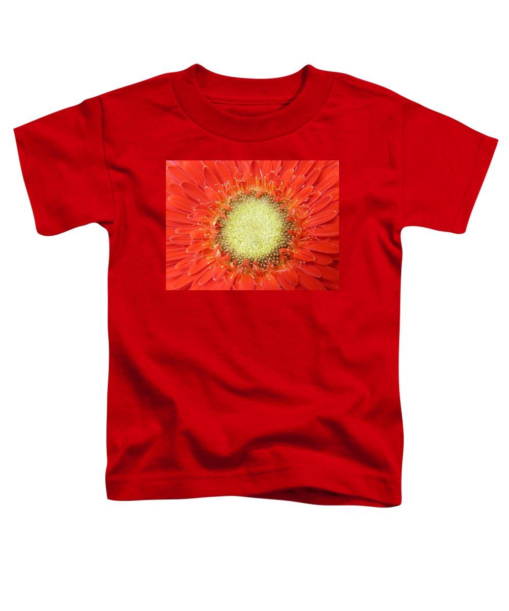 Gerbera Toddler T-Shirt featuring the photograph Gerbera by Daniel Csoka