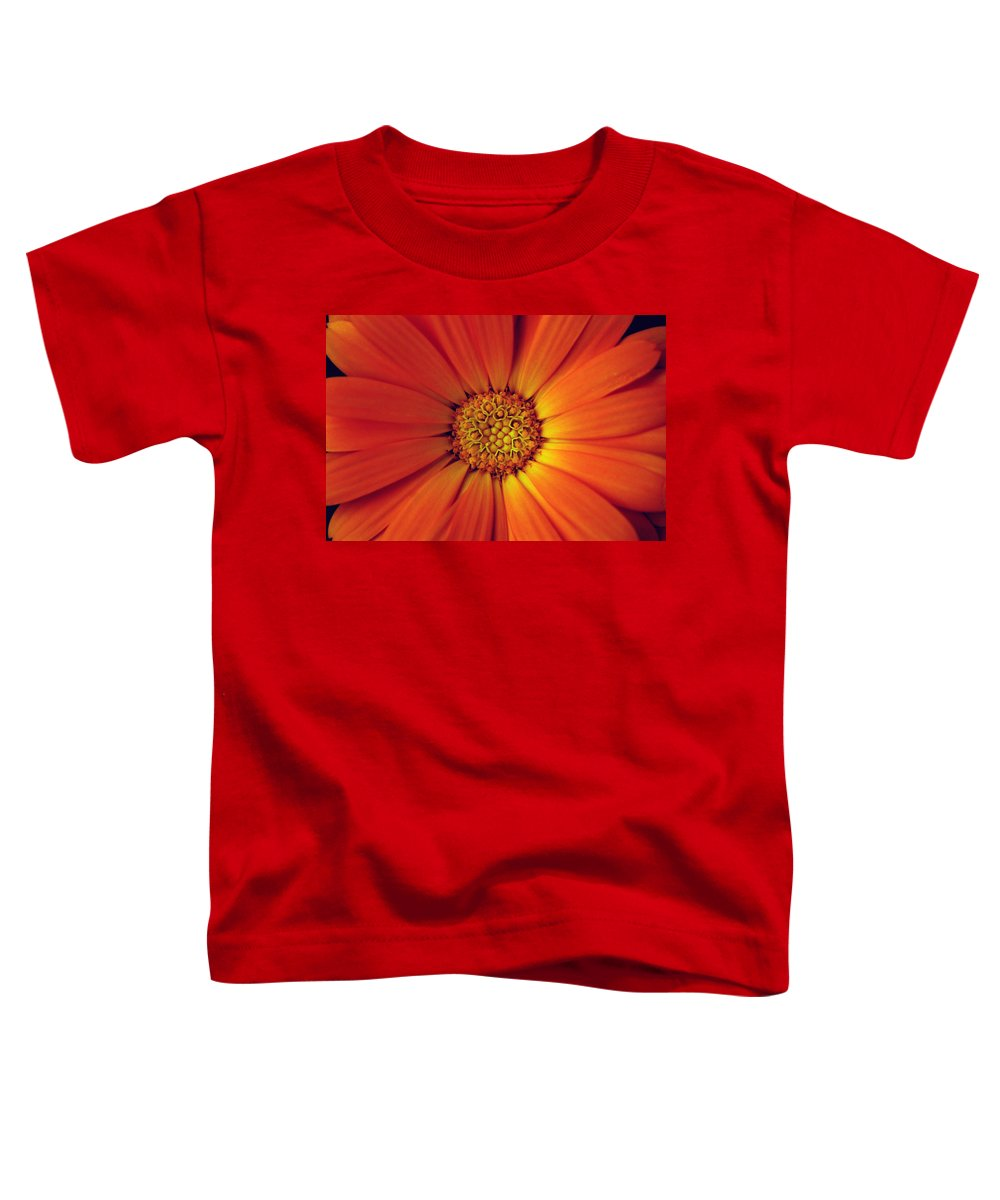 Plant Toddler T-Shirt featuring the photograph Close Up Of An Orange Daisy by Ralph A Ledergerber-Photography