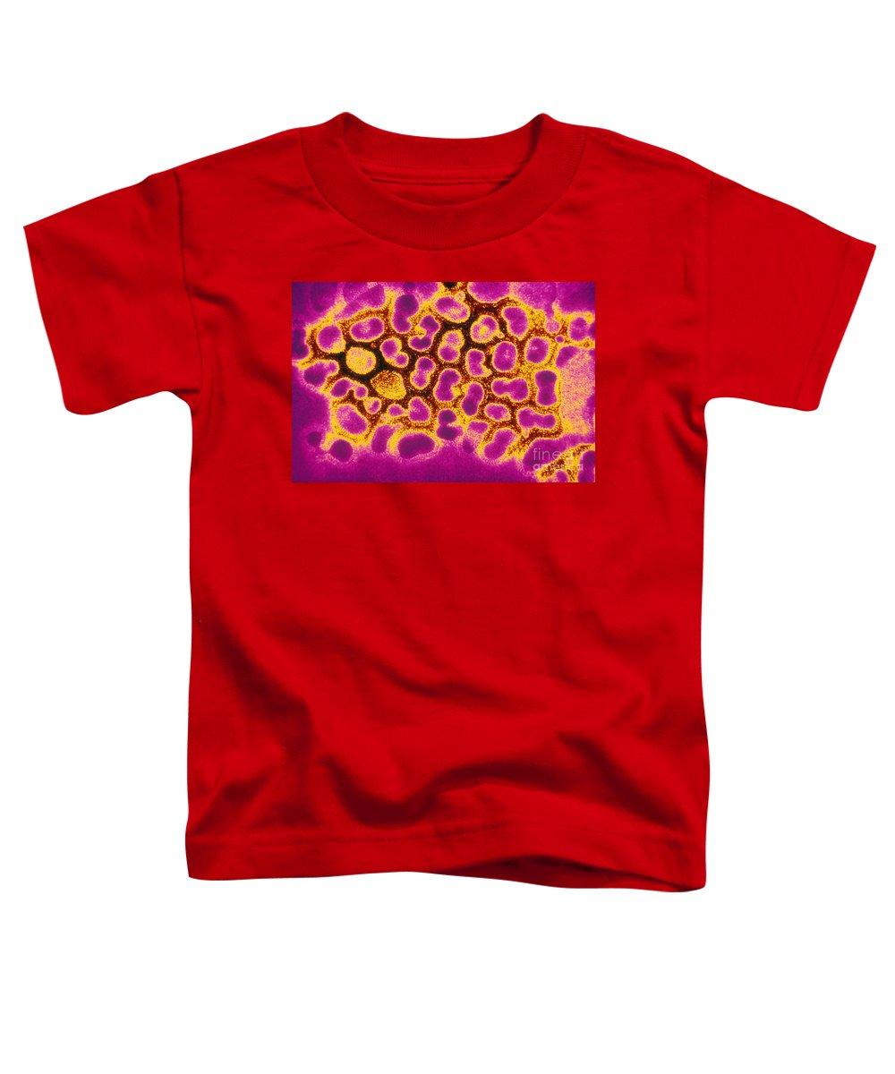 Influenza Virus Photographs Toddler T-Shirts