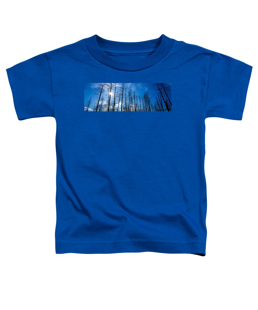 Photography Toddler T-Shirt featuring the photograph Burnt Pine Trees In A Forest, Grand by Panoramic Images