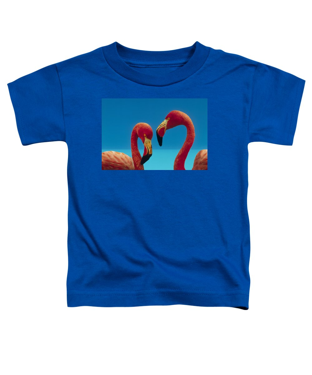 00172310 Toddler T-Shirt featuring the photograph Greater Flamingo Courting Pair by Tim Fitzharris