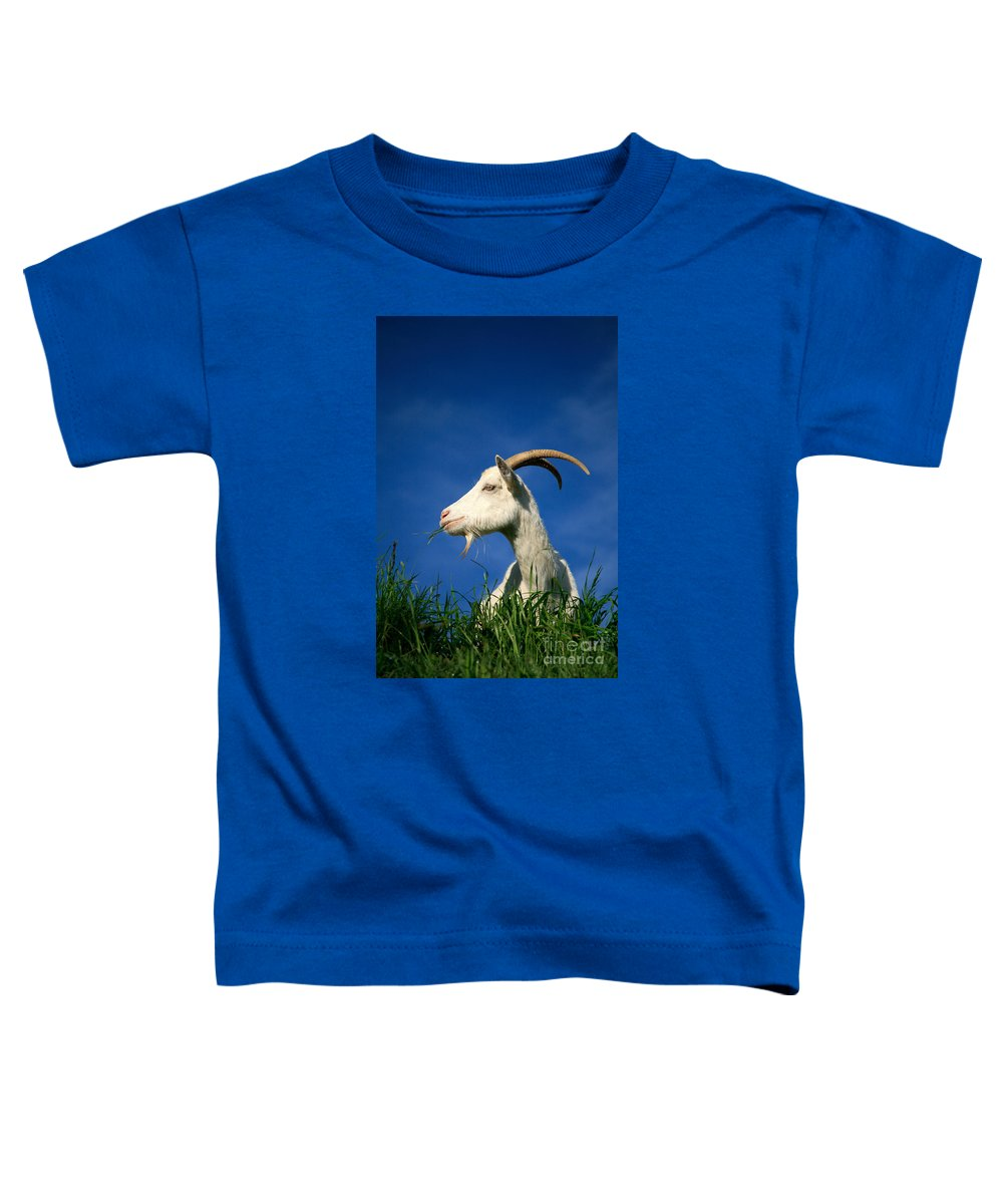 Animals Toddler T-Shirt featuring the photograph Goat by Gaspar Avila