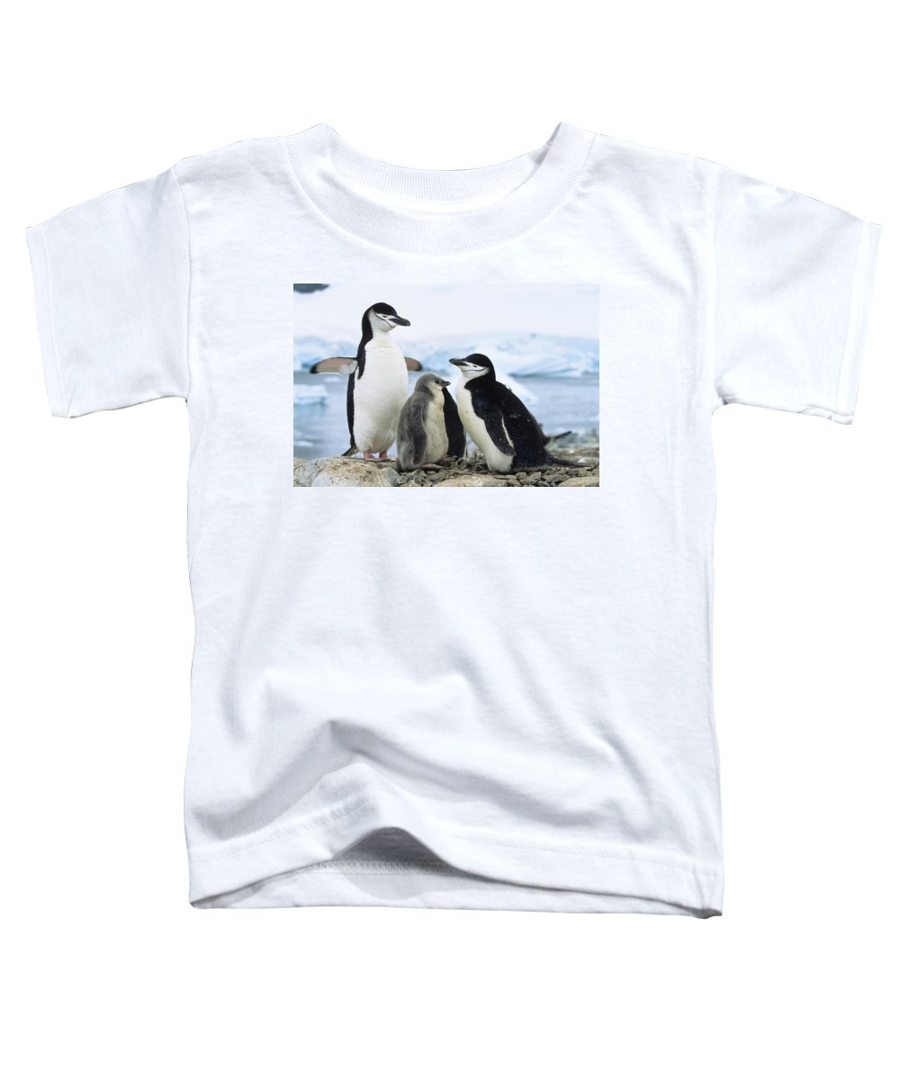Feb0514 Toddler T-Shirt featuring the photograph Chinstrap Penguins And Chicks Antarctica by Konrad Wothe