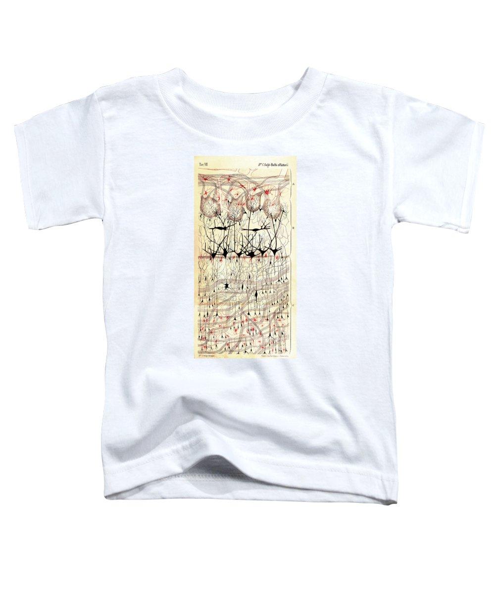 Histology Toddler T-Shirts