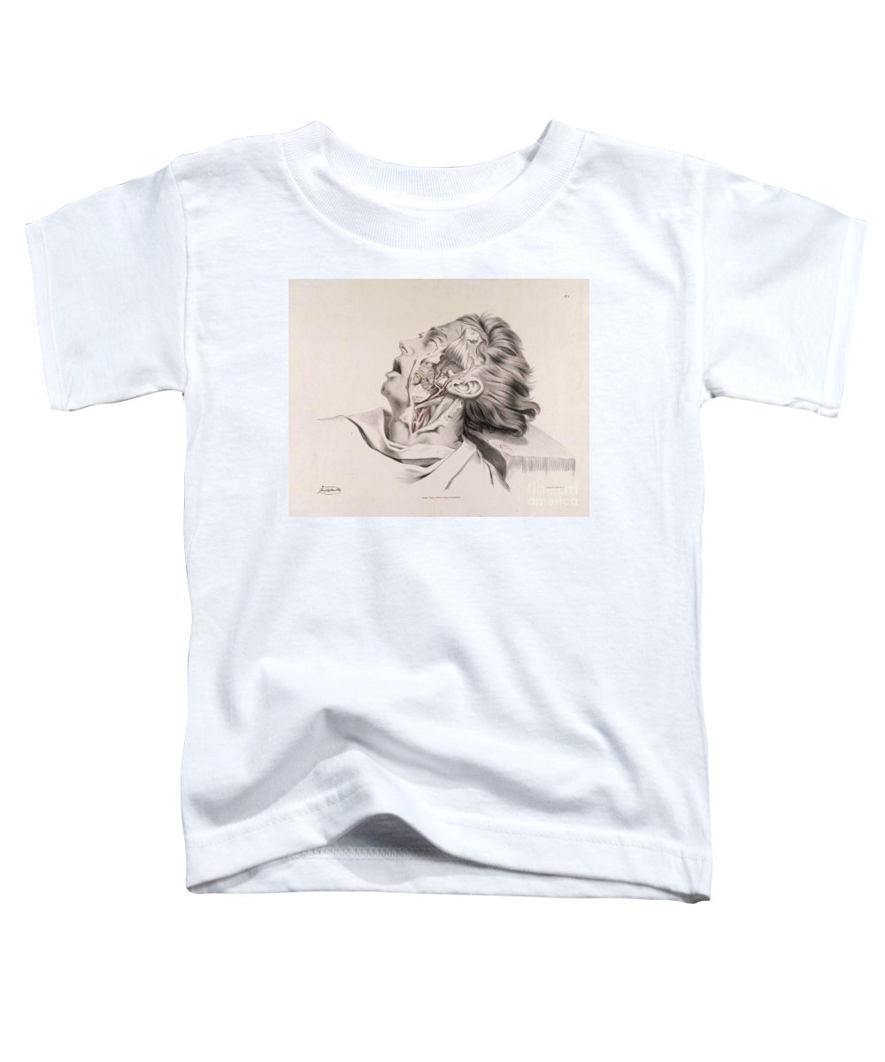 Anatomy Of Arteries Toddler T-Shirt featuring the photograph Historical Anatomical Illustration by Science Source