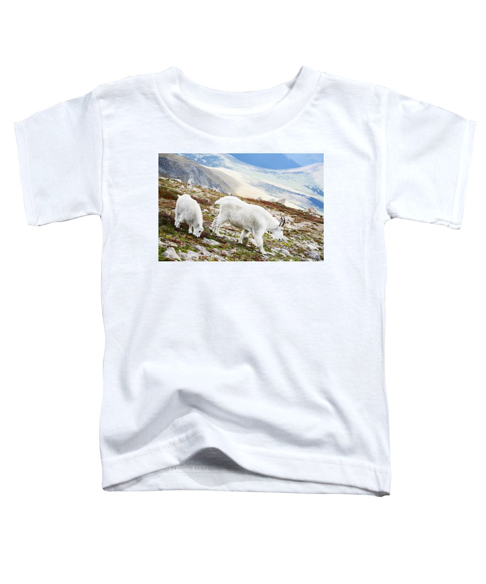 Mountain Toddler T-Shirt featuring the photograph Mountain Goats 1 by Marilyn Hunt