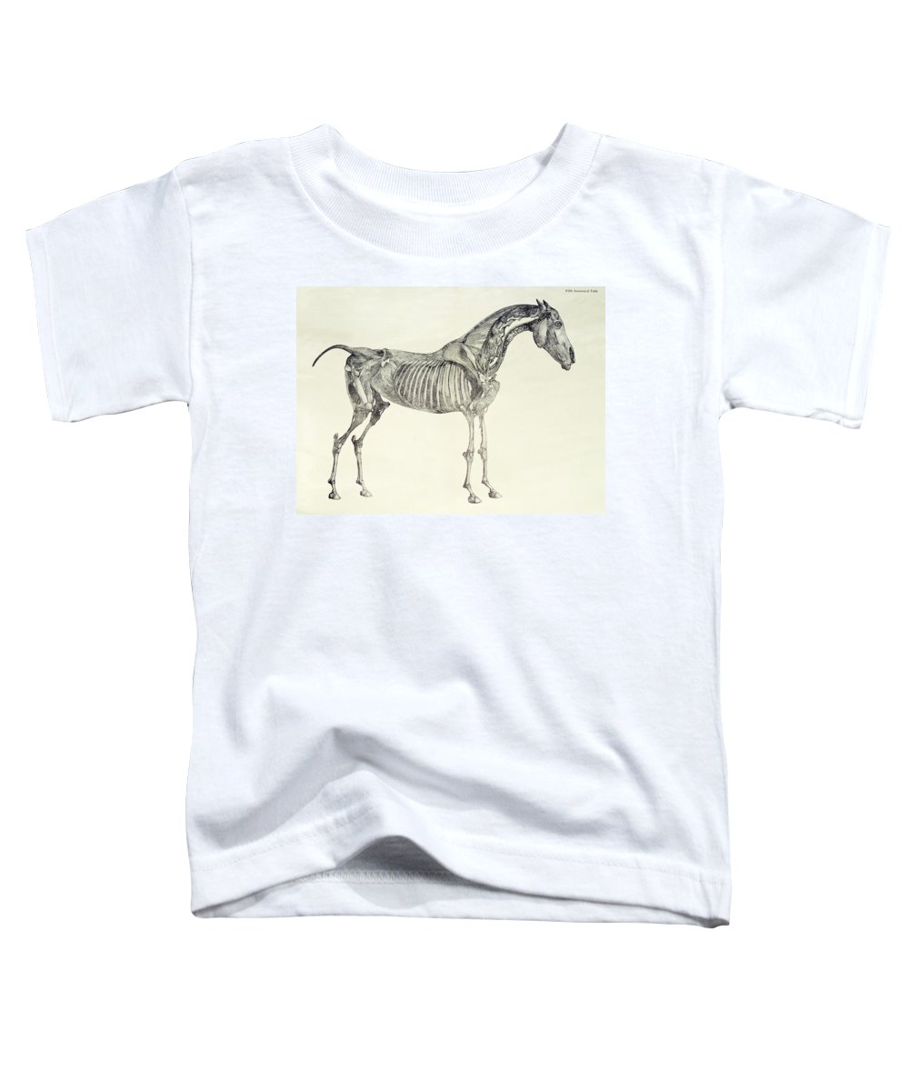 Enchanting George Stubbs The Anatomy Of The Horse Ornament - Anatomy ...