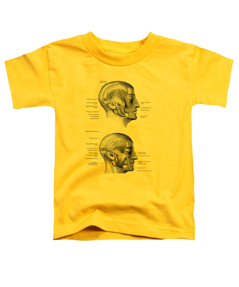 Face Muscles Toddler T-Shirt featuring the drawing Face Muscular Diagram - Dual Side View - Vintage Print by Vintage Anatomy Prints