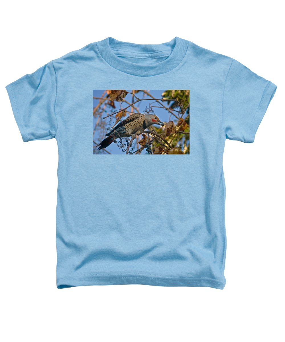 Animal Toddler T-Shirt featuring the photograph Northern Flicker by Ron Sanford