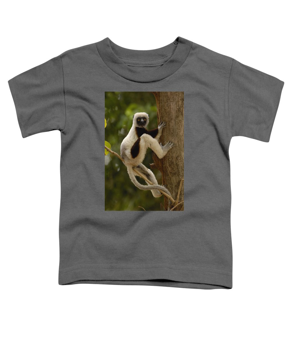Feb0514 Toddler T-Shirt featuring the photograph Coquerels Sifaka Madagascar by Pete Oxford