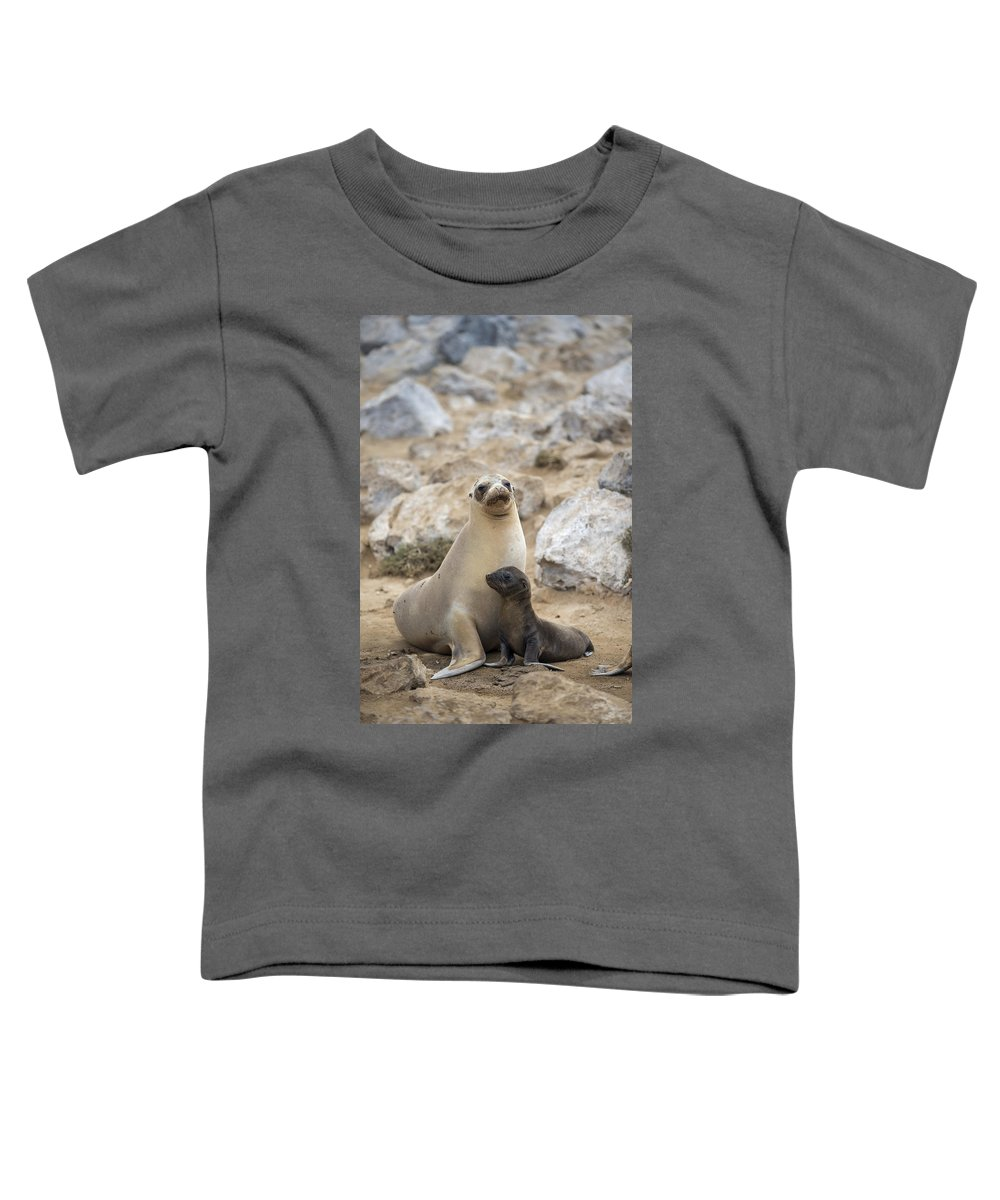 Tui De Roy Toddler T-Shirt featuring the photograph Galapagos Sea Lion And Pup Champion by Tui De Roy