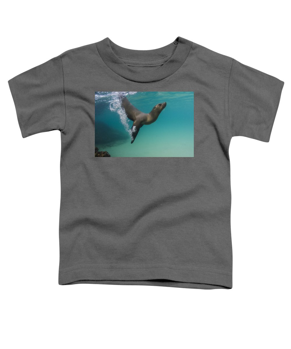 Pete Oxford Toddler T-Shirt featuring the photograph Galapagos Sea Lion Swimming Ecuador by Pete Oxford