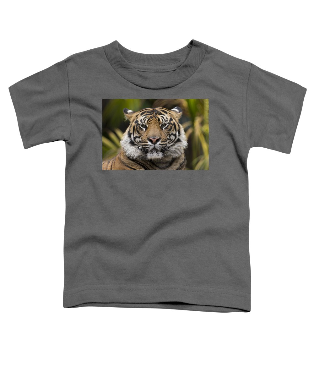 San Diego Zoo Toddler T-Shirt featuring the photograph Sumatran Tiger by San Diego Zoo