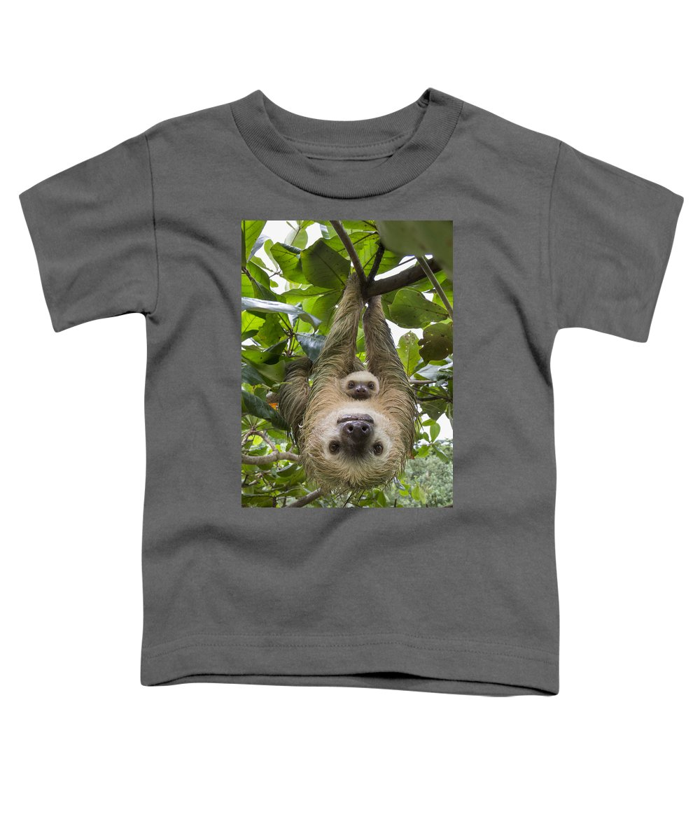 Suzi Eszterhas Toddler T-Shirt featuring the photograph Hoffmanns Two-toed Sloth And Old Baby by Suzi Eszterhas