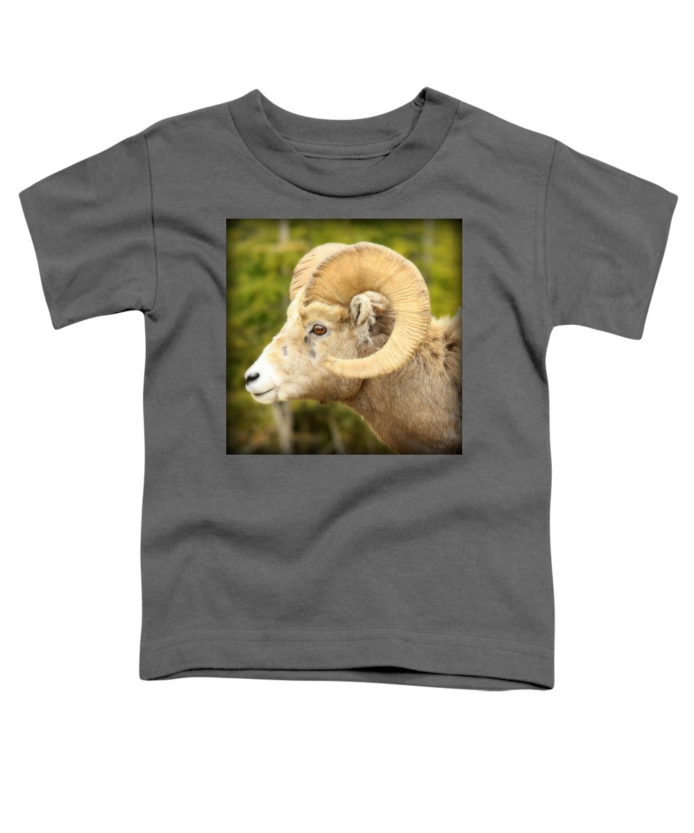 Rocky Mountain Bighorn Sheep Toddler T-Shirts