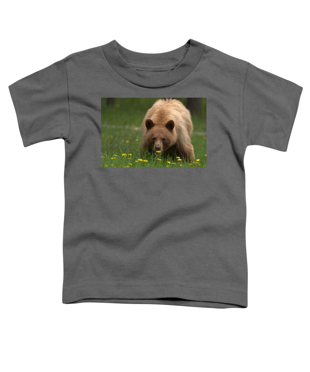 Bear Toddler T-Shirt featuring the photograph Black Bear by Frank Madia