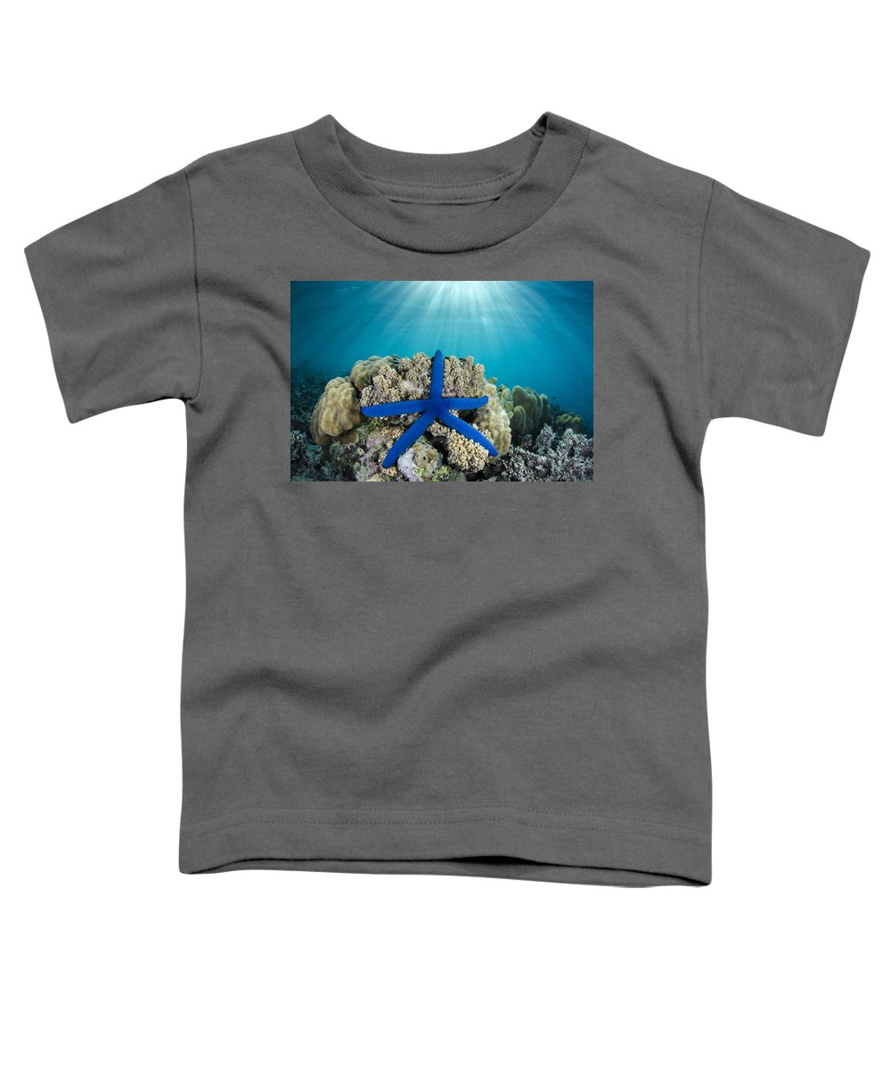 Pete Oxford Toddler T-Shirt featuring the photograph Blue Sea Star Fiji by Pete Oxford