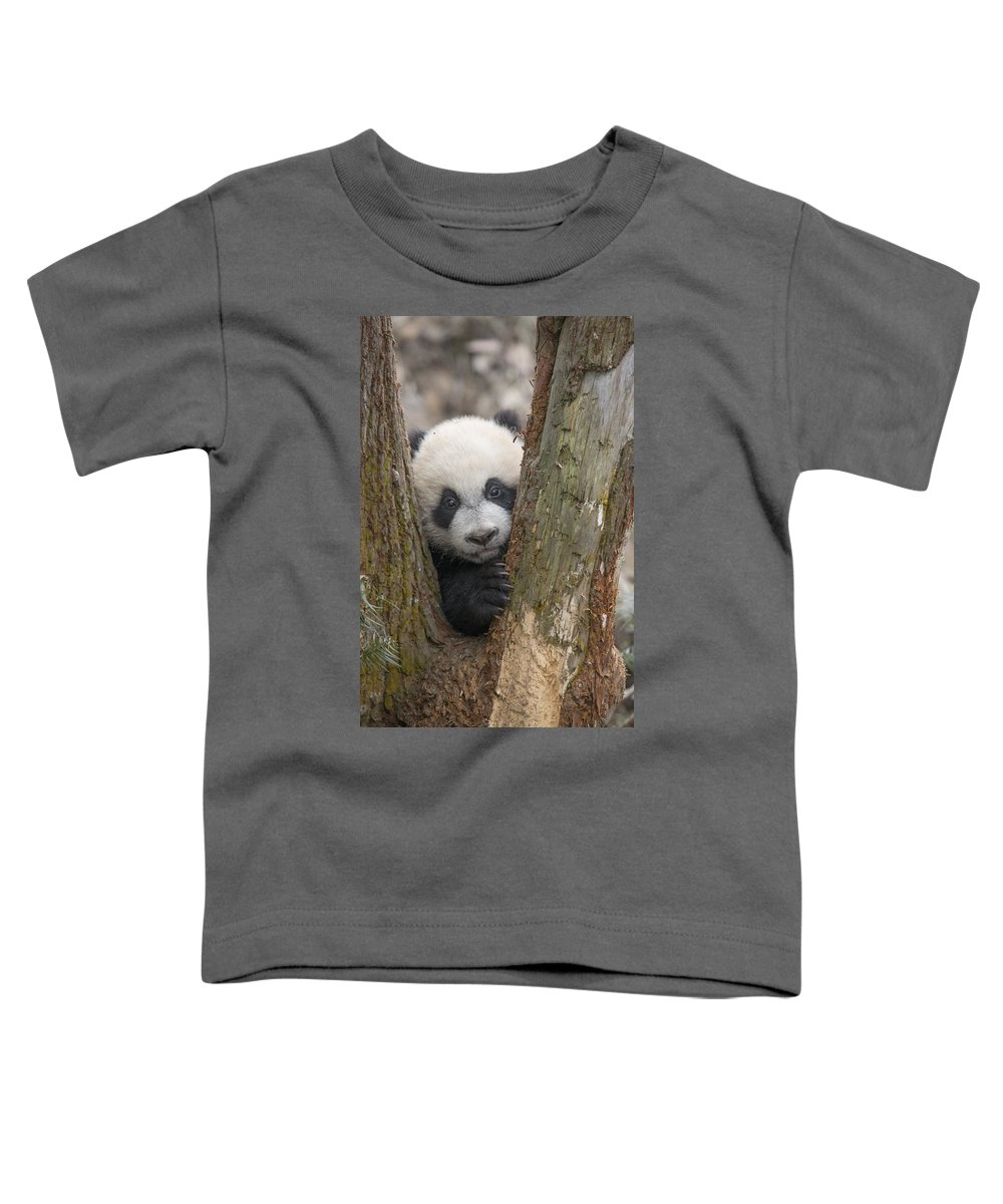 Katherine Feng Toddler T-Shirt featuring the photograph Giant Panda Cub Bifengxia Panda Base by Katherine Feng