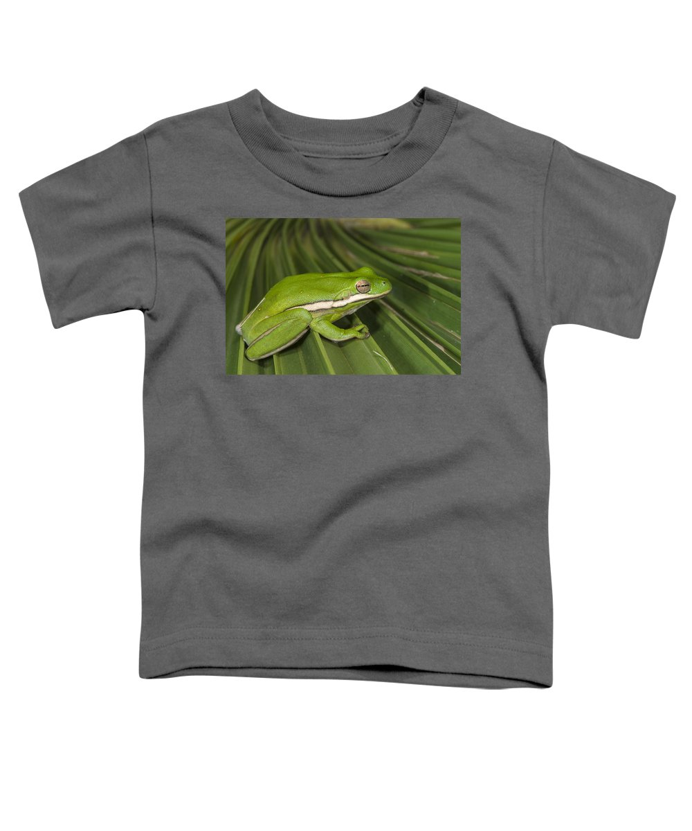 Pete Oxford Toddler T-Shirt featuring the photograph Green Tree Frog Little St Simons Island by Pete Oxford