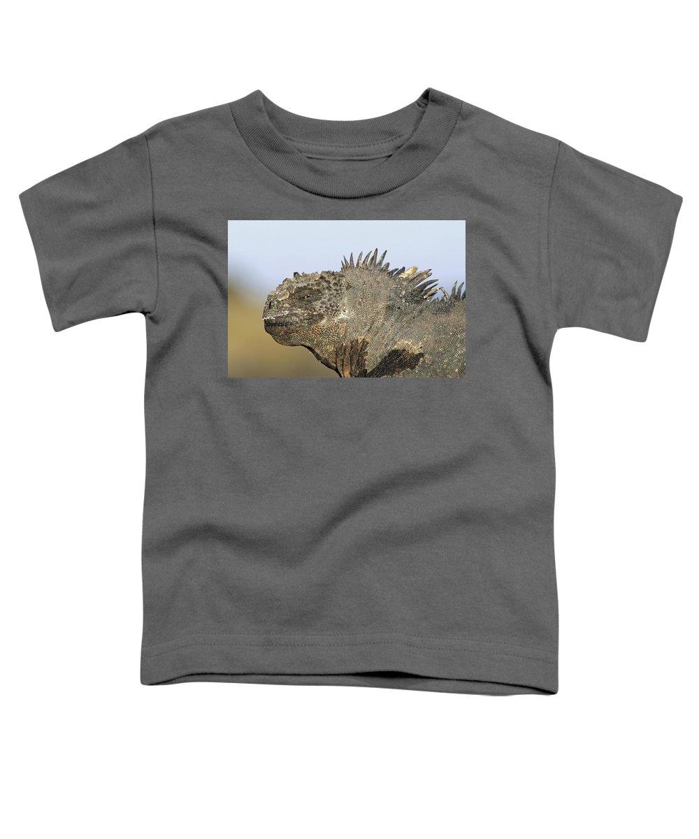 Feb0514 Toddler T-Shirt featuring the photograph Marine Iguana Male Santa Cruz Island by Tui De Roy
