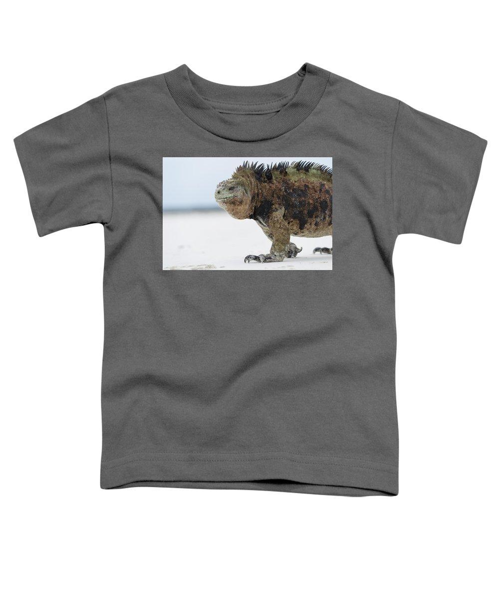 Tui De Roy Toddler T-Shirt featuring the photograph Marine Iguana Male Turtle Bay Santa by Tui De Roy