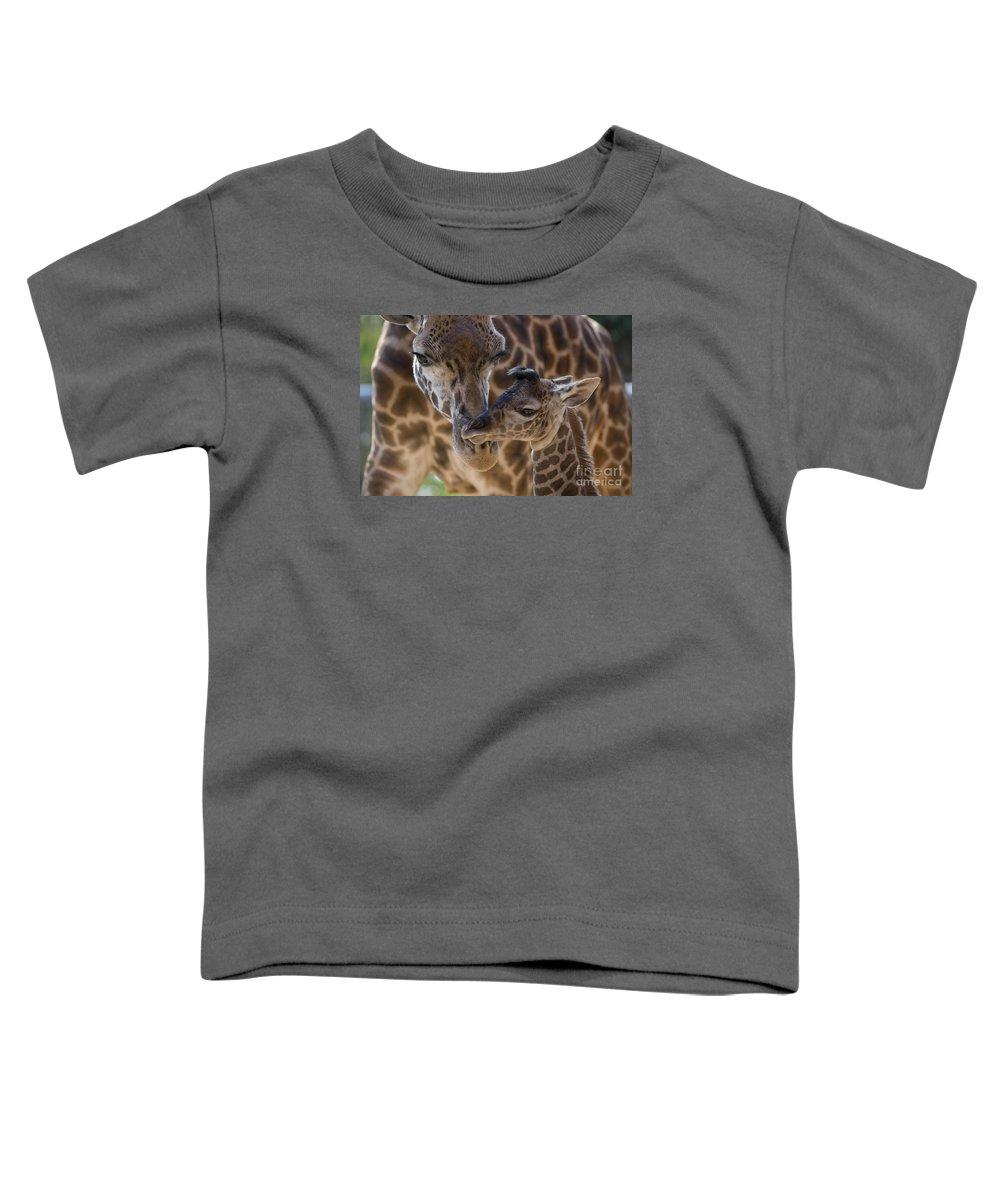 San Diego Zoo Toddler T-Shirt featuring the photograph Masai Giraffe And Calf by San Diego Zoo