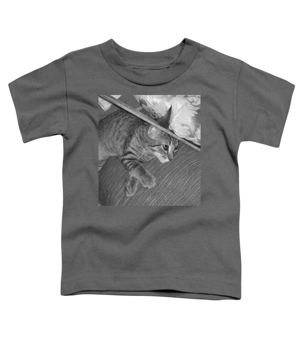 Kitten Toddler T-Shirt featuring the photograph Model Kitten by Pharris Art