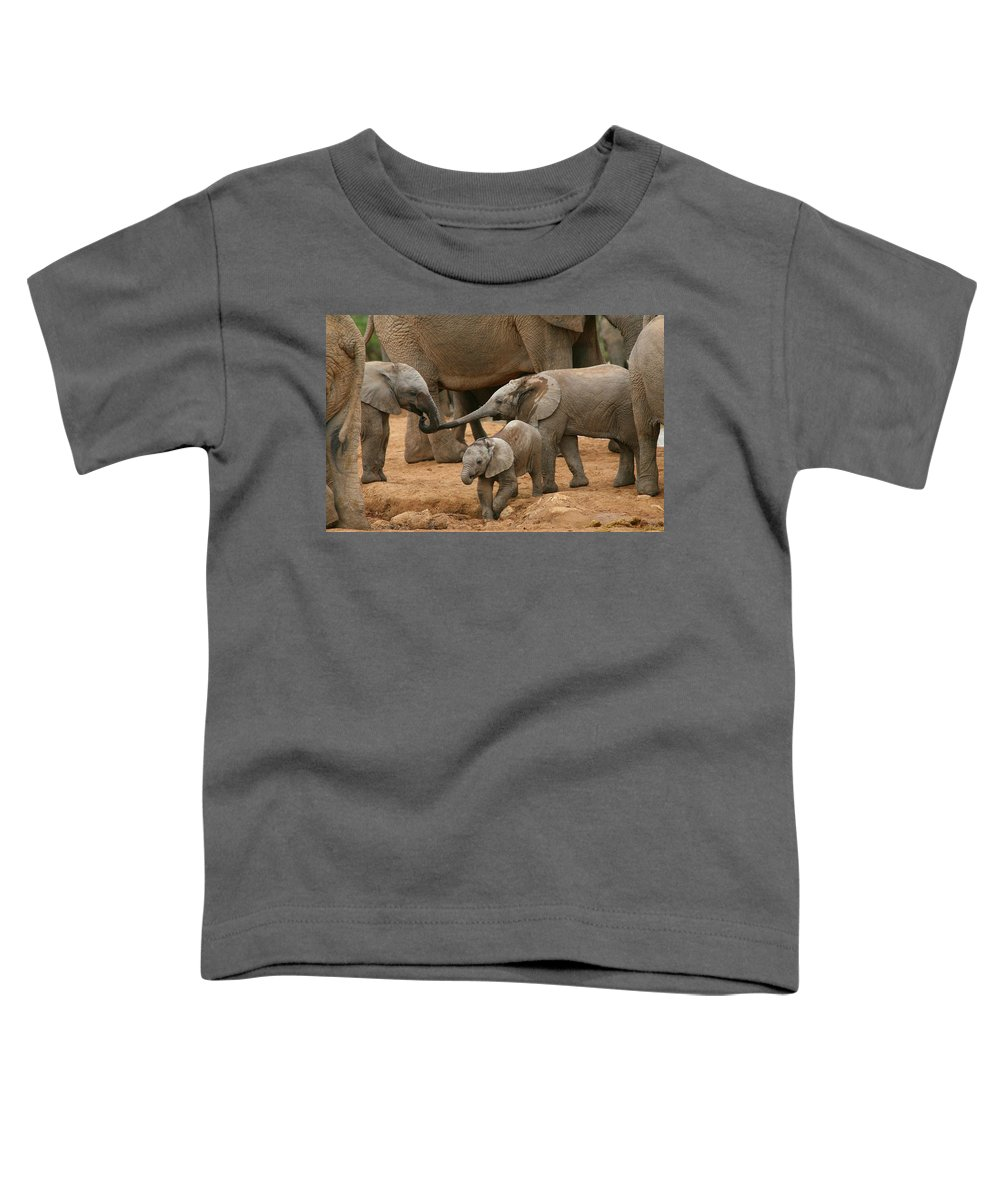 Elephant Toddler T-Shirt featuring the photograph Pachyderm Pals by Bruce J Robinson