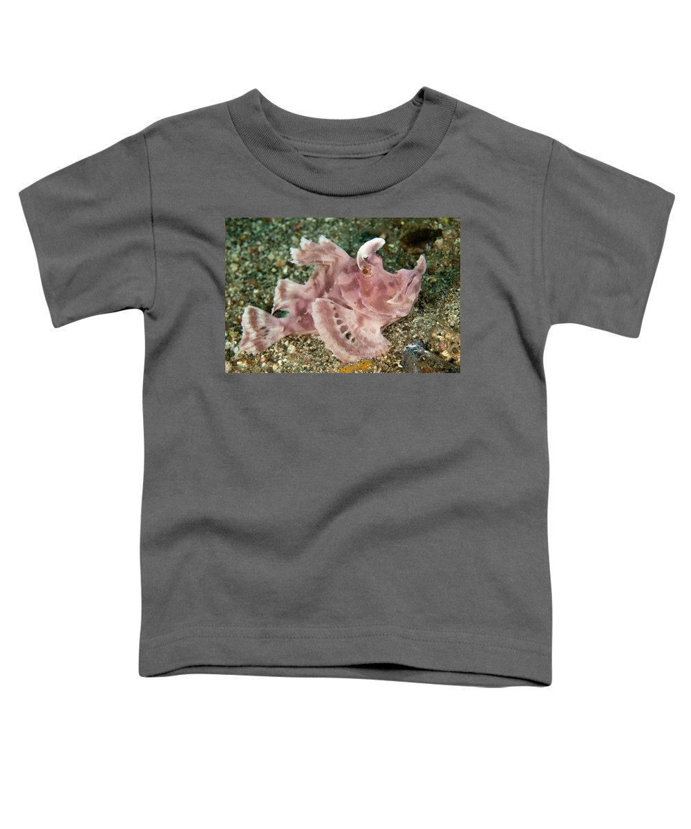 Flpa Toddler T-Shirt featuring the photograph Paddle-flap Scorpionfish Lembeh Straits by Colin Marshall