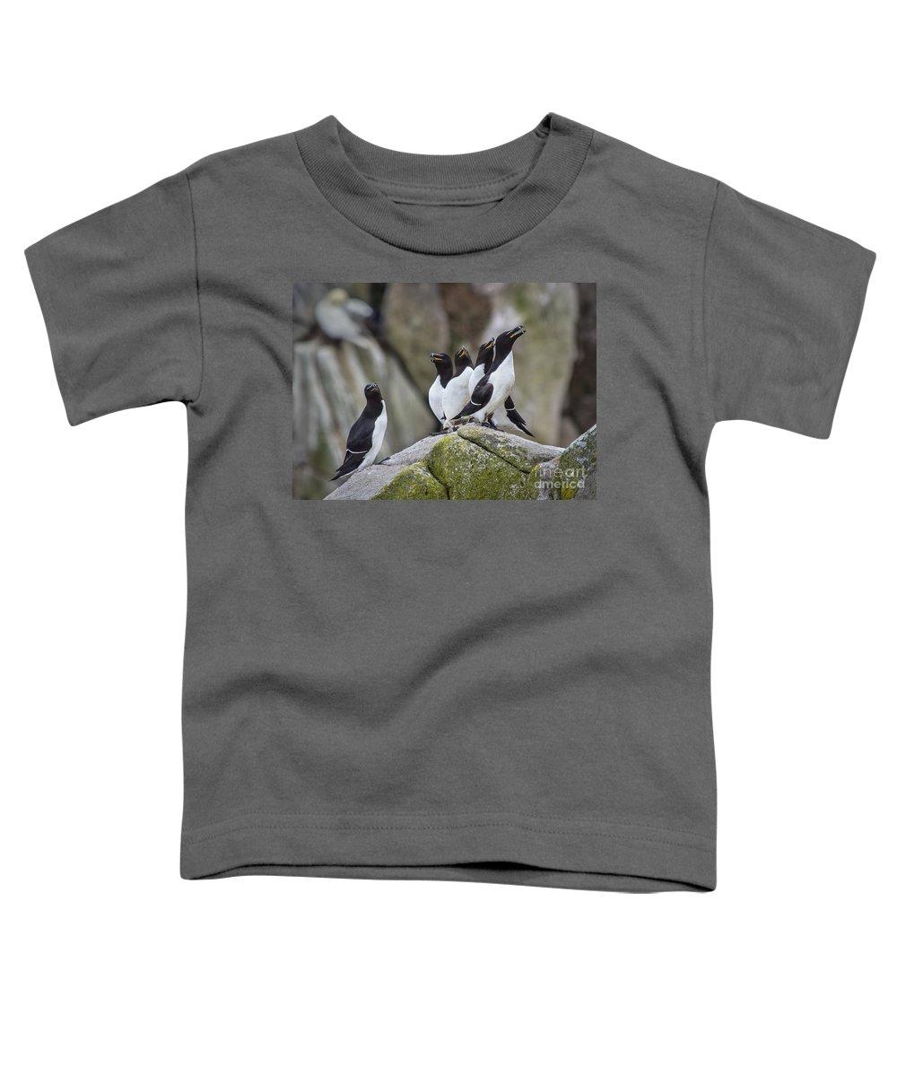 Razorbill Toddler T-Shirts