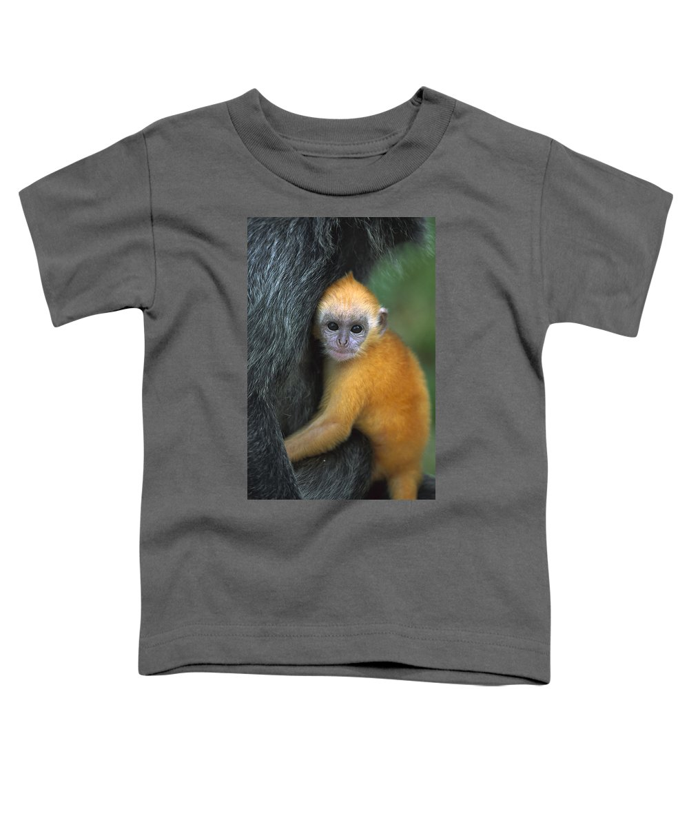 Mp Toddler T-Shirt featuring the photograph Silvered Leaf Monkey Trachypithecus by Cyril Ruoso