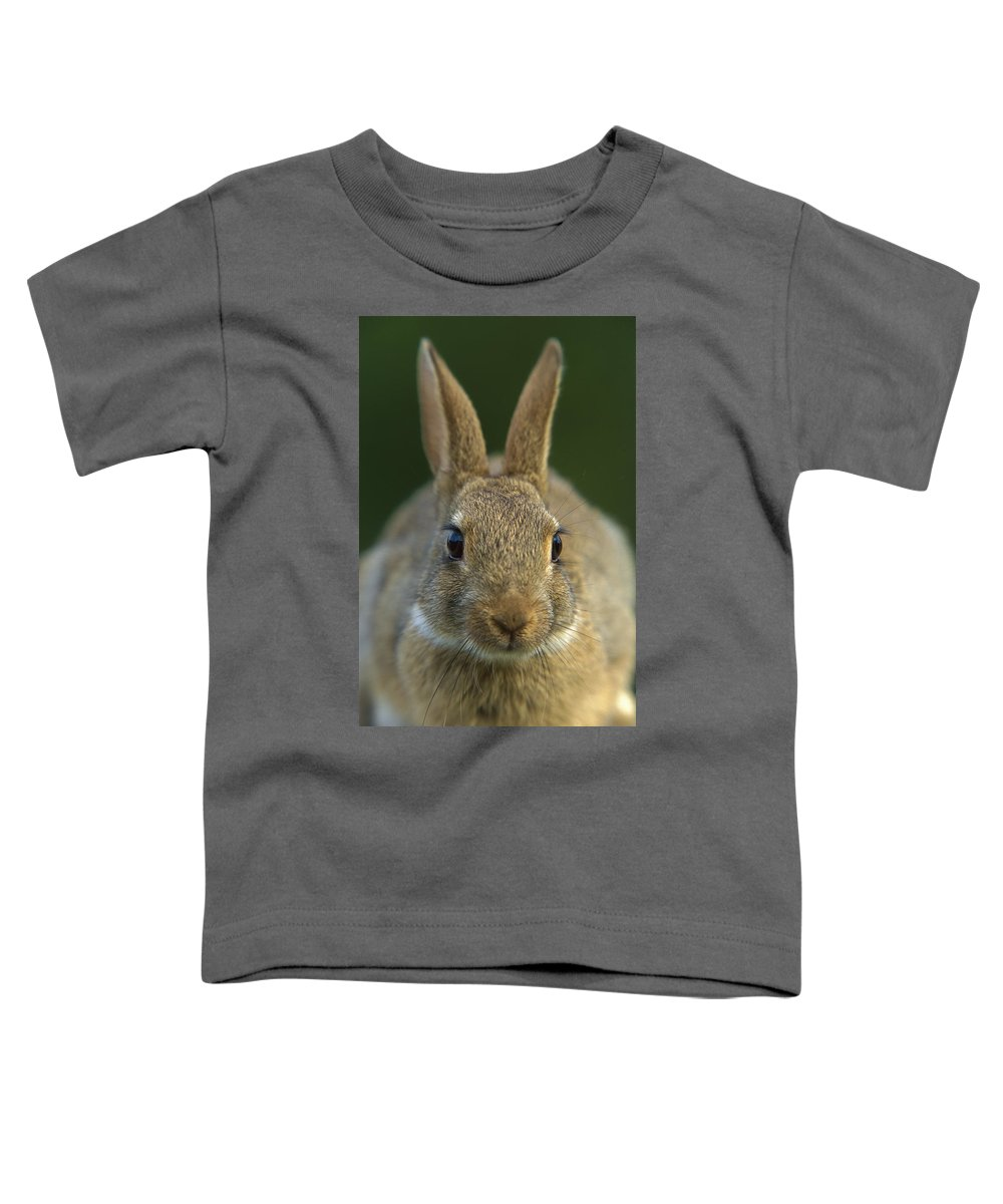 Mp Toddler T-Shirt featuring the photograph European Rabbit Oryctolagus Cuniculus by Cyril Ruoso