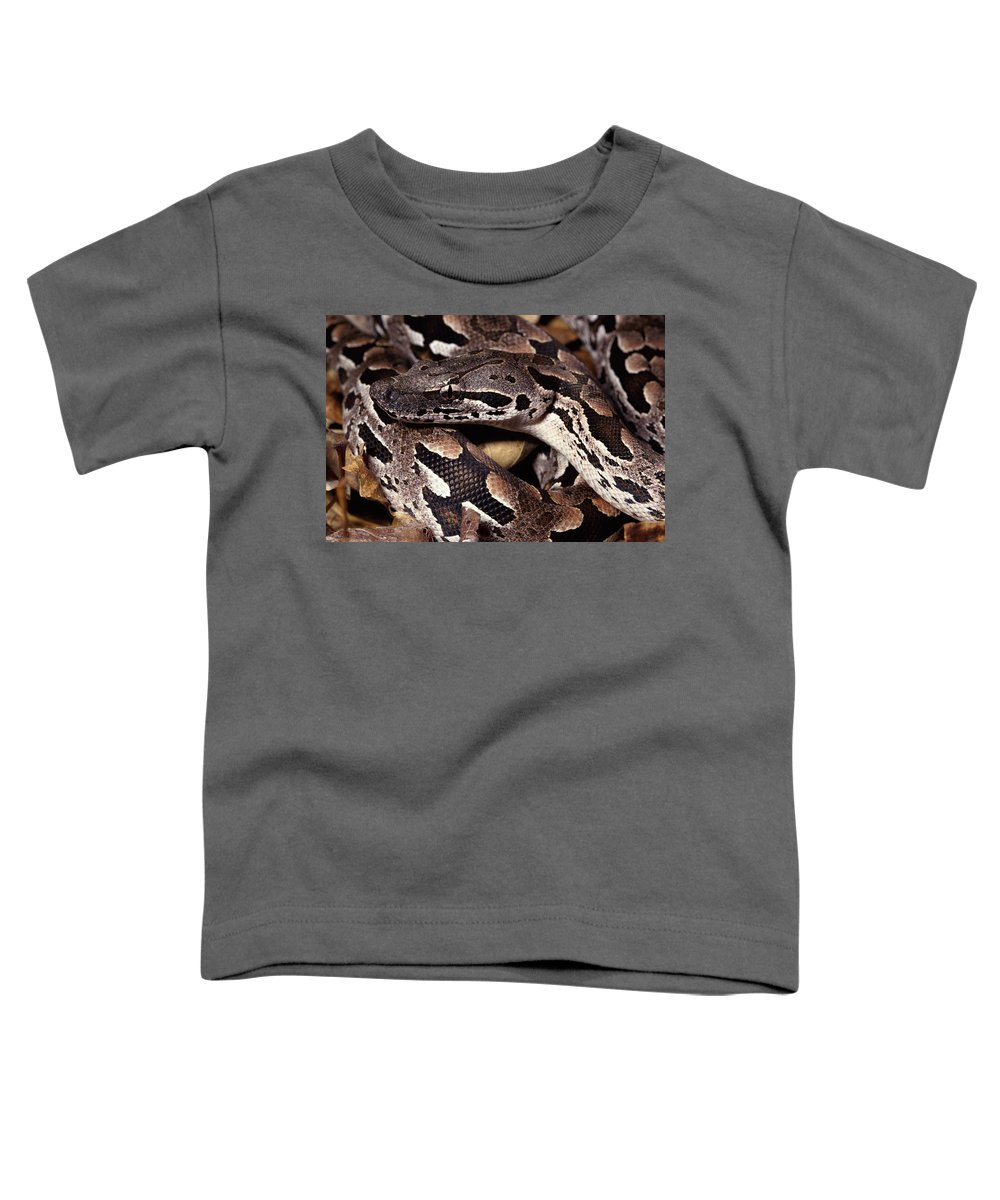 Mp Toddler T-Shirt featuring the photograph Madagascar Ground Boa Acrantophis by Michael & Patricia Fogden