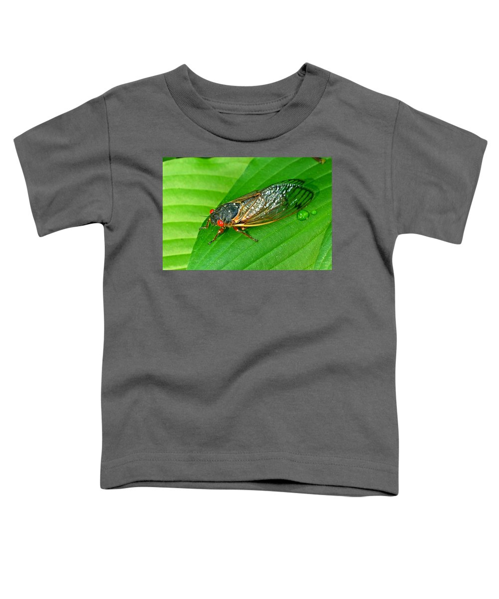 17 Toddler T-Shirt featuring the photograph 17 Year Periodical Cicada by Douglas Barnett