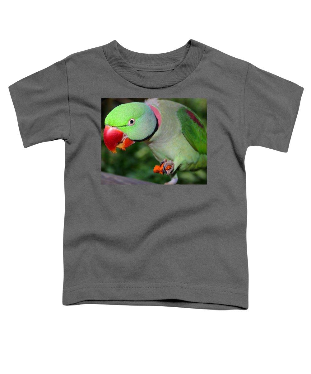 Alexandrine Parrot Toddler T-Shirt featuring the photograph Alexandrine Parrot Feeding by Ralph A Ledergerber-Photography
