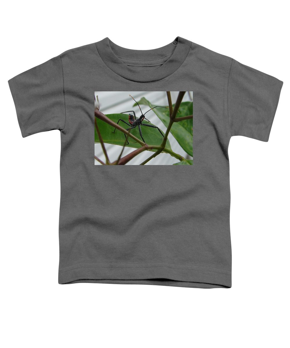 Insect Red Black Green Leaf Toddler T-Shirt featuring the photograph Assassin Bug by Luciana Seymour