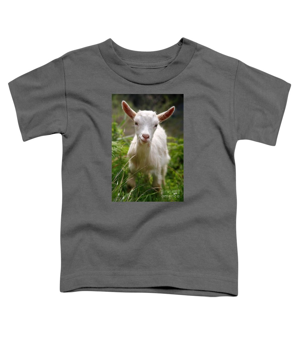 Animals Toddler T-Shirt featuring the photograph Baby Goat by Gaspar Avila