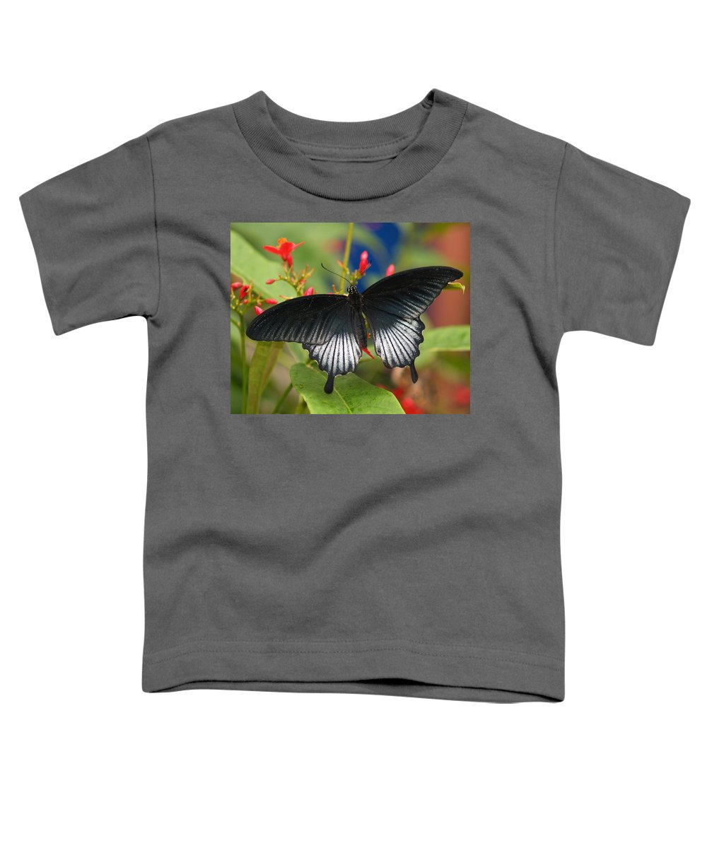 Butterfly Toddler T-Shirt featuring the photograph Black Beauty by Gaby Swanson