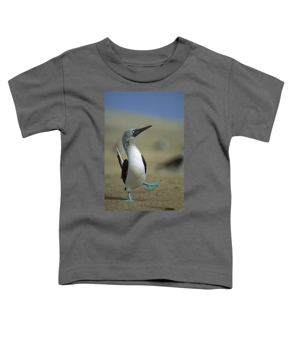 Blue-footed Booby Toddler T-Shirt featuring the photograph Blue-footed Booby Sula Nebouxii by Tui De Roy